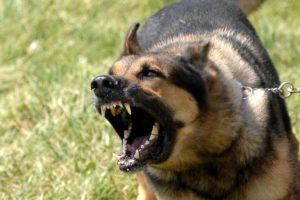 Заболеванием собаки бешенством