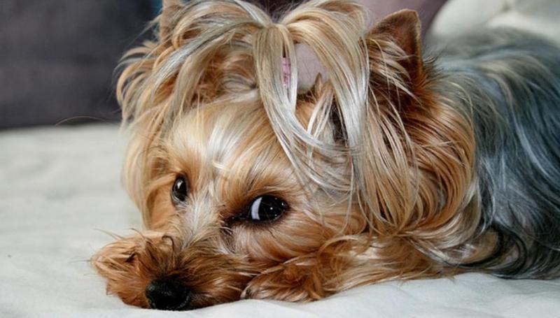 Рвота у собаки желтого цвета