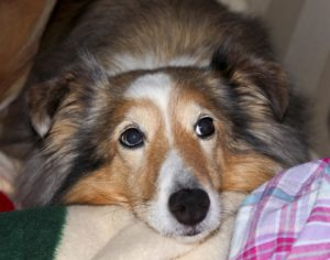 Стресс у собаки