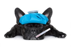 Повышение температуры у собаки
