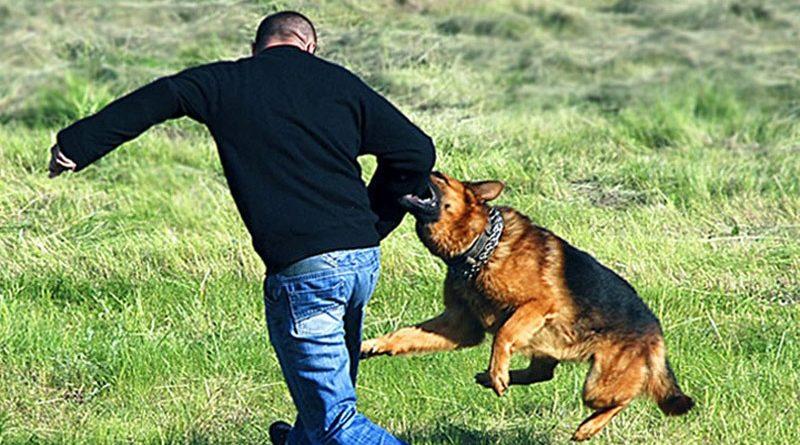 Собака кусает человека