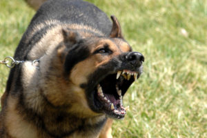 Проявление агрессии у собак