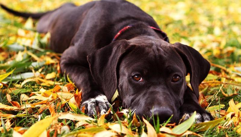 Осложнения у собаки после стерилизации