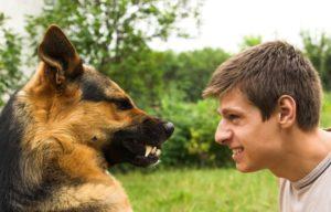 Проявление агрессии у собаки