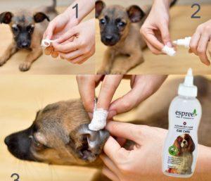 Процедура очистки ушей собаке