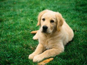 Глисты у собаки