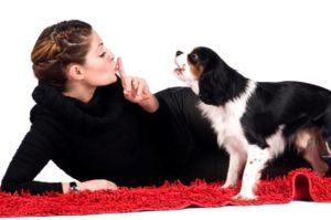 Способы научить собаку перестать лаять