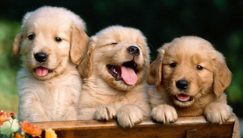 Полезные советы при выборе клички для собаки