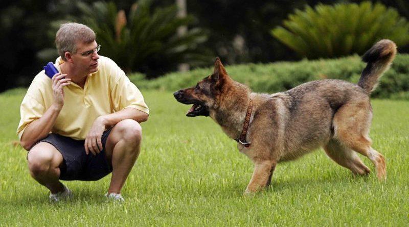 Как научить собаку основным командам