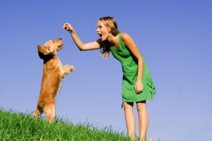 Обучение собаки