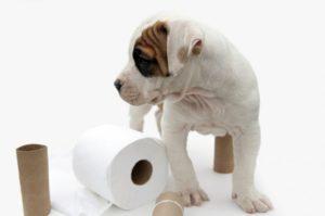 Причины поноса у собаки