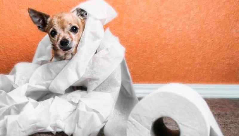 Как остановить понос у собаки