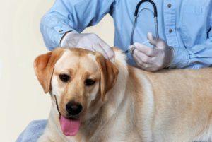 Комплексная прививка собаке