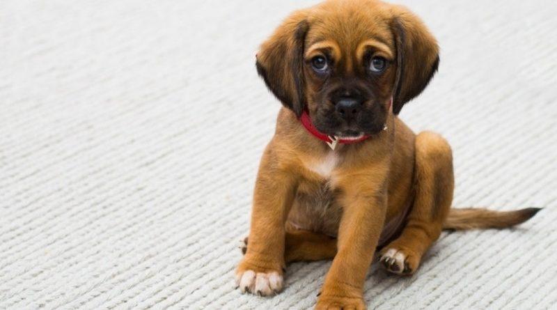 Почему собаки едят экскременты