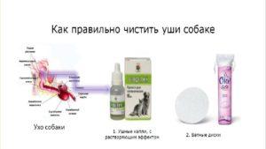 Схема чистки ушей собаке