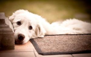 Собака на пороге