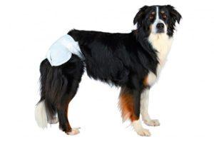 Трусики для собак во время течки