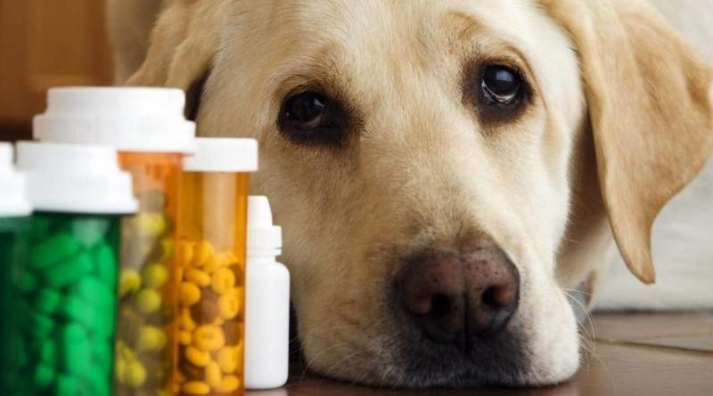 Популярные средства от глистов для собак