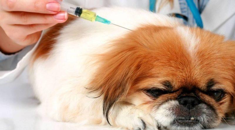 Виды препаратов для вакцинации собак