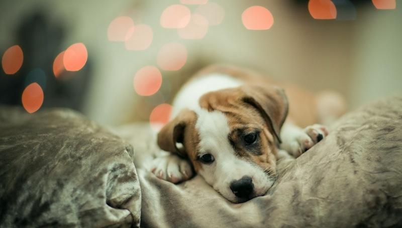 Причины появления и способы лечения энтерита у собак