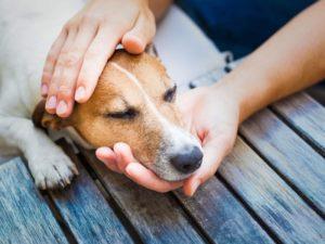 Приступ кашля у собаки