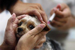 Прививка щенку от клещей