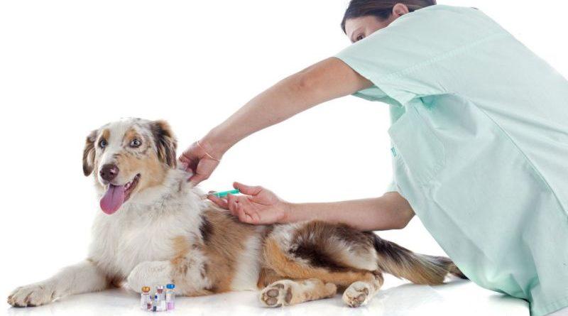 Календарь профилактических прививок для собак