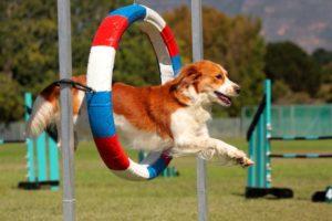 Профилактика собак