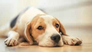 Причины появления и способы лечения рвоты у собак