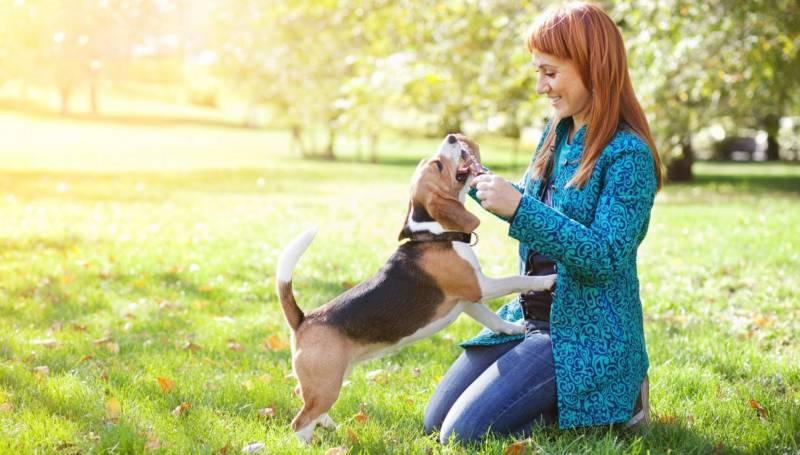 Особенности поведения собаки с человеком