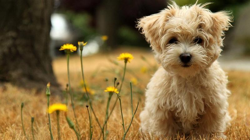 Аллергия у собак: симптомы и признаки