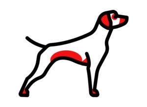 Места проявления аллергии у собак