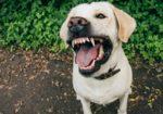 Бешенство у домашних собак