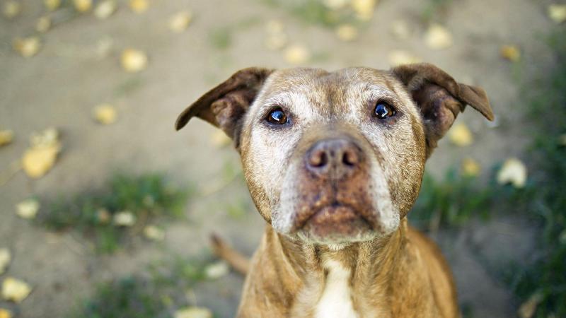 Демодекоз у собак: лечение в домашних условиях