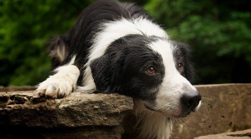 Грибок у собаки - способы лечения