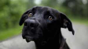 Симптомы инсульта у собак