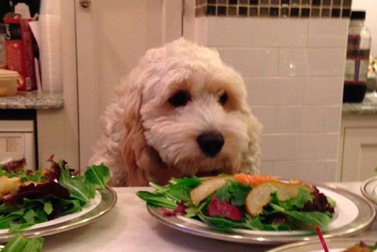 кормление собаки овощами