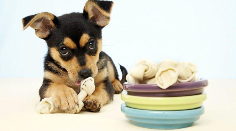 Как правильно кормить собаку? 10