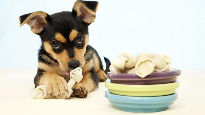 Как правильно кормить собаку? 1