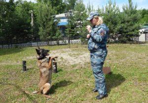 Обучение служебной собаки командам