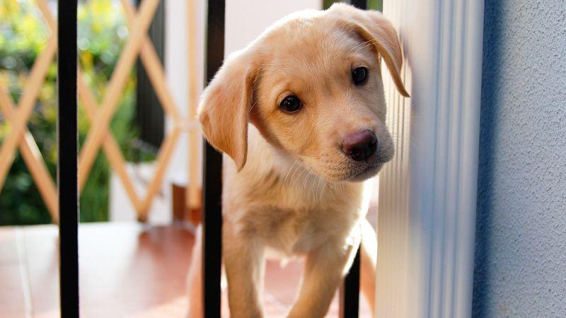 Как лечить понос у щенка