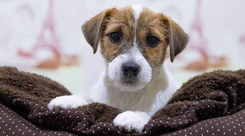 Диарея во время течки у собак