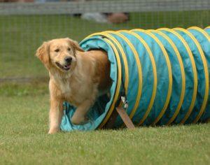 Туннель для собак