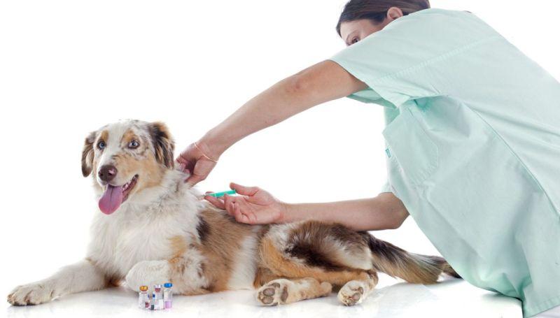 Вакцины для собак - виды, побочные эффекты