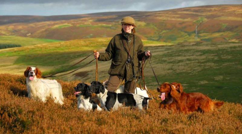 Нагонка и натаска охотничьих собак