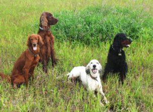 Воспитание охотничьей собаки