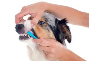 Рекомендации по чистке зубов собаке