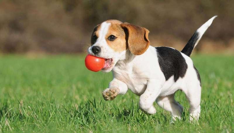 Дрессировка щенка - советы и рекомендации