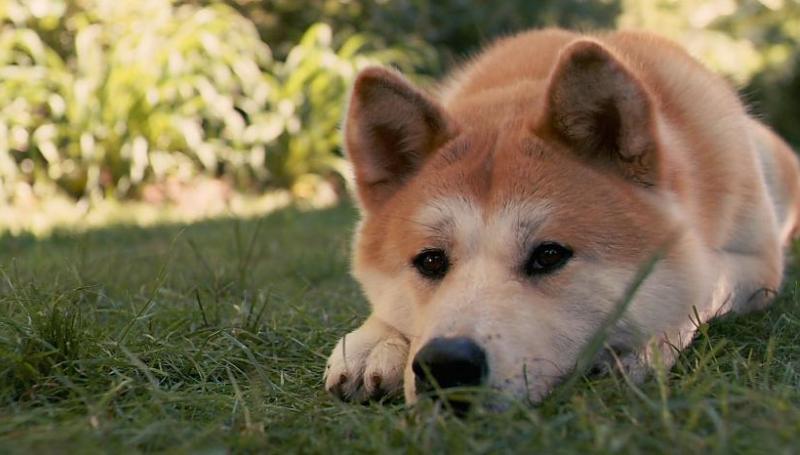 Симптомы и лечение энтероколита у собаки