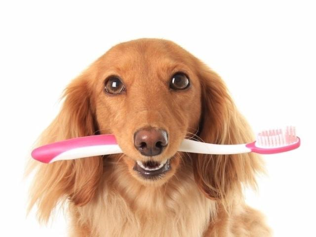 как почистить зубы собаке